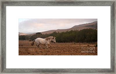 White Mare Gallops #1 - Panoramic Brighter Framed Print