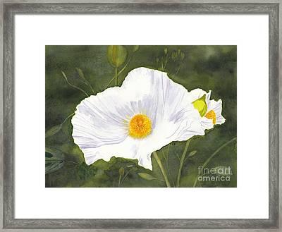 White Matilija Poppy  Framed Print