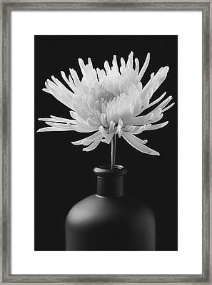 White Mum In Black Vase Framed Print by Garry Gay