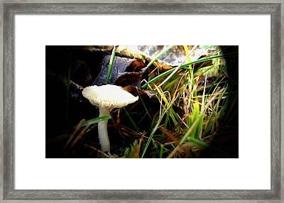 White Mushroom Framed Print