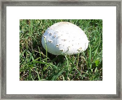 White Mushroom Top Framed Print