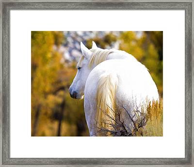 White Mustang Mare Framed Print
