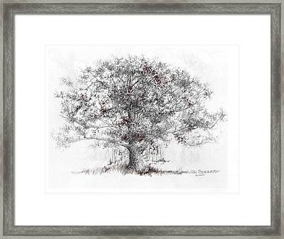 White Oak Framed Print by Jim Hubbard