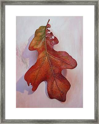 White Oak Leave Framed Print by Hans Droog