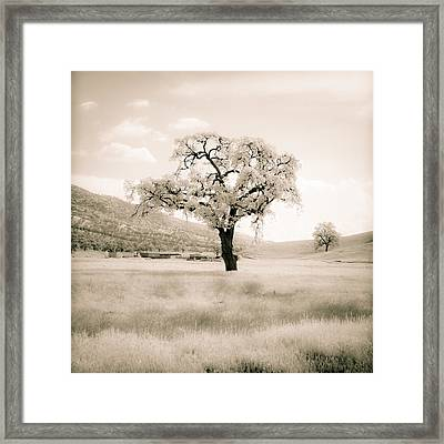 White Oak Framed Print