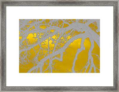 White Oak -yellow Orange Framed Print