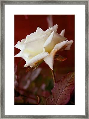 White Framed Print by Ofelia  Arreola