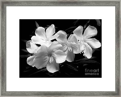 White Oleander Framed Print by Amar Sheow