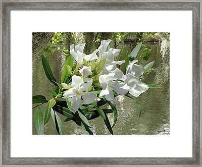 White Oleander By Lakeside Framed Print by Spadecaller