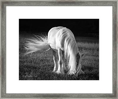 White On Black And White Framed Print by Terry Kirkland Cook