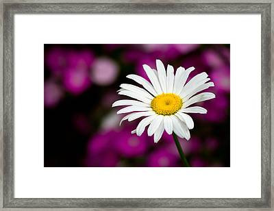 White On Pink Framed Print