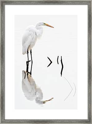 White On White Framed Print by Dawn Currie