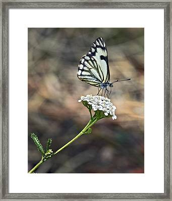 White On White Framed Print by James Steele
