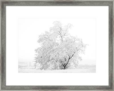 White On White Framed Print by Marilyn Hunt
