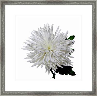 White On White Framed Print by Peter Dorrell