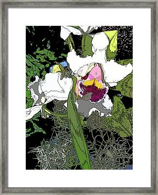 White Orchid Framed Print by Adina Campbell