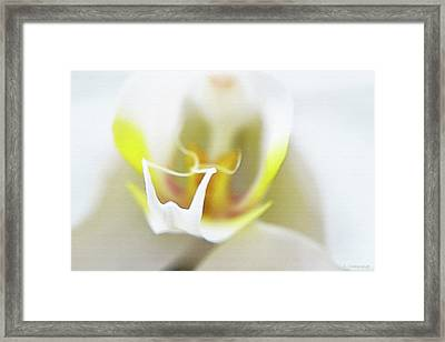 White Orchid Art By Sharon Cummings Framed Print