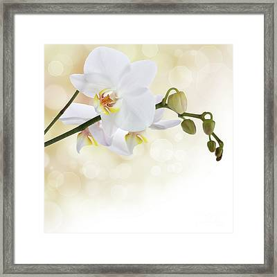 White Orchid Flower Framed Print by Pics For Merch