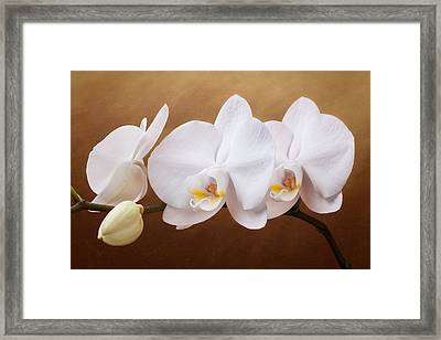 White Orchid Flowers And Bud Framed Print