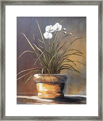 White Orchid In Oil Framed Print by Beth Maddox