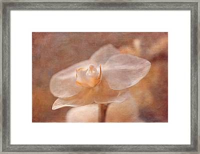 White Orchid Framed Print by Maria Angelica Maira
