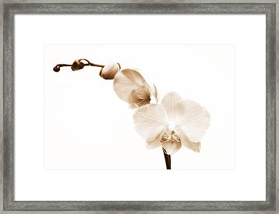 White Orchid Framed Print by Mindy Sommers