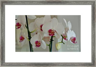 White Orchid Mothers Day Framed Print by Marsha Heiken