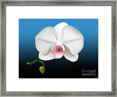 White Orchid Framed Print by Rand Herron