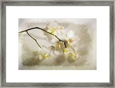 White Orchid Framed Print by Randi Grace Nilsberg