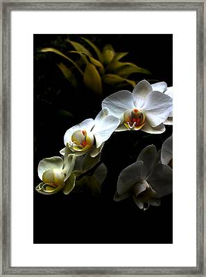 White Orchid With Dark Background Framed Print by Jasna Buncic