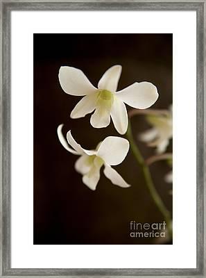White Orchids 2 Framed Print