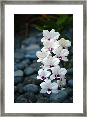 Framed Print featuring the photograph White Orchids by Debbie Karnes