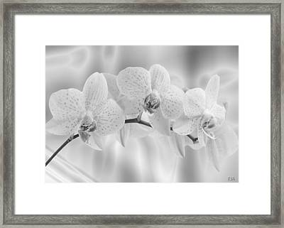 White Orchids Framed Print by Eric Amsellem
