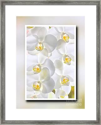White Orchids Framed Framed Print