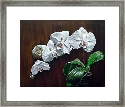 White Orchids II Framed Print