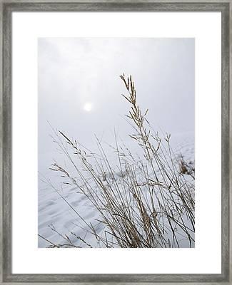 White Out Framed Print by Stan Wojtaszek