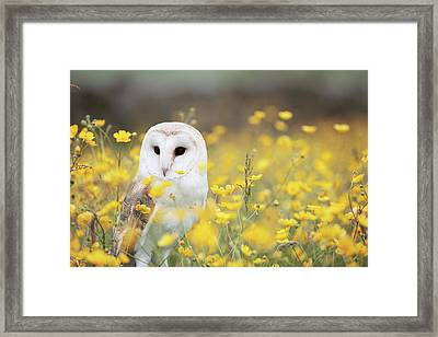 White Owl Framed Print by Happy Home Artistry
