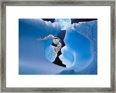 White Owl Framed Print by Jack Zulli