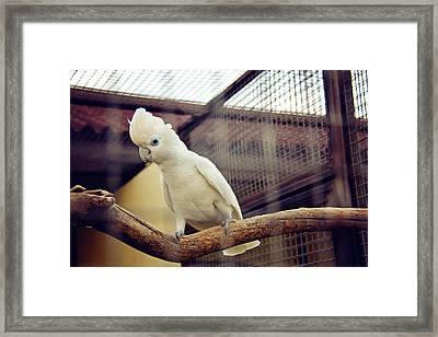 White Parrot  Framed Print by Svetlana Yelkovan