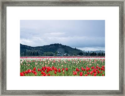 White Pass Highway With Tulips Framed Print