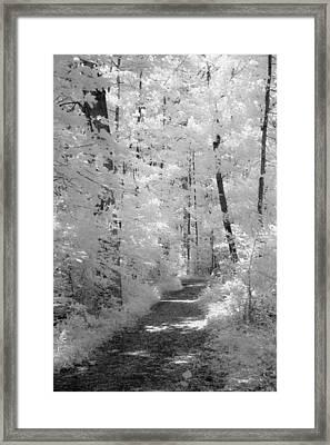White Path Framed Print