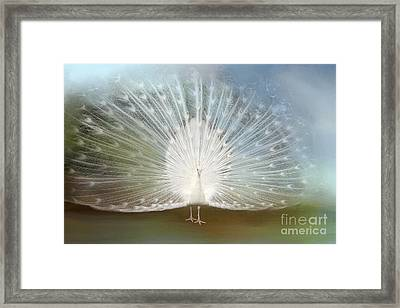Framed Print featuring the photograph White Peacock In All His Glory by Bonnie Barry