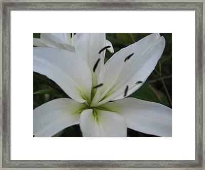 White Pearl Framed Print by Debra     Vatalaro