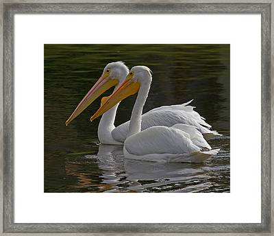White Pelican Pair Framed Print