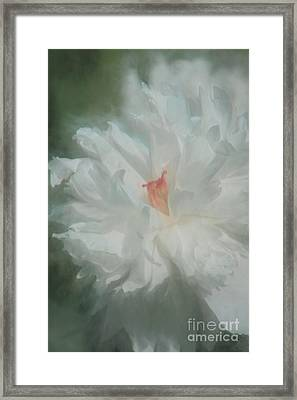 Framed Print featuring the photograph White Peony by Benanne Stiens