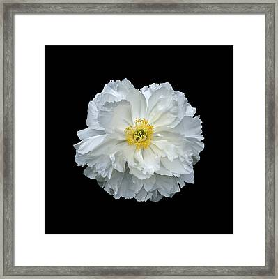 White Peony Framed Print by Charles Harden