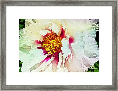 Framed Print featuring the painting White Peony by Joan Reese