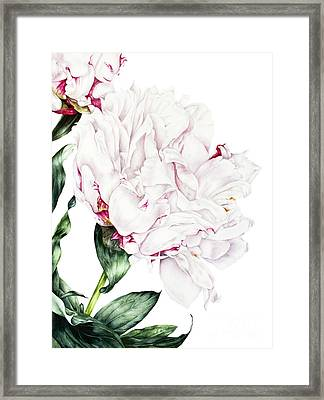 White Peony Framed Print by Marie Burke