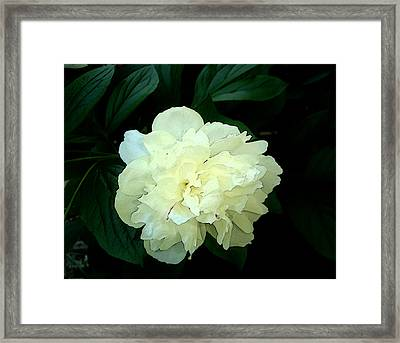 Framed Print featuring the photograph White Peony Rose Sumie Print by Margie Avellino