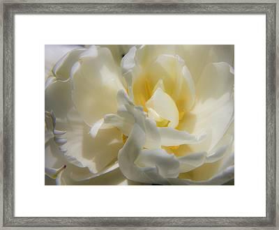 White Peony Tulip Detail Framed Print by Teresa Mucha